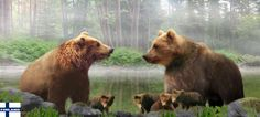 Bearfamily on the beach of a little forest pond.