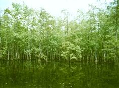 Louisiana Swamps best view I can think of