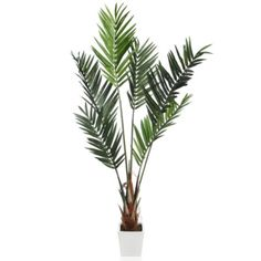 Palm Tree Kentia 7' from Z Gallerie