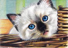 Ragdoll kitten by LenaZLair on deviantART