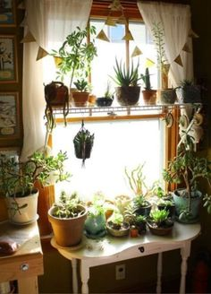 If you are looking for easy plants decoration tips and ideas. So here are 7 different way to how to decorate indoor plants in your living room. Deco Nature, Decoration Plante, Room With Plants, Plant Rooms, Plant Decor, Indoor Plants, Indoor Gardening, Hanging Plants, Pot Plants