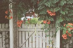 Image uploaded by Smile ♫~. Find images and videos about love, cute and beautiful on We Heart It - the app to get lost in what you love. We Heart It, White Picket Fence, Picket Fences, Cute Cottage, Backyard Projects, Backyard Ideas, Tumblr, Spring Is Coming, Garden Structures