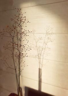 Interior panels, birch / Sisustuspaneelit, koivu Wood Paneling, Birch, Dandelion, Interior, Flowers, Plants, Design, Wooden Panelling, Woodwork