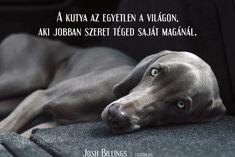 Josh Billings idézet a kutyák szeretetéről.