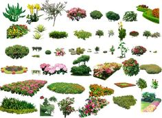 Landscape Plants & Shrubs Collection | Architectural Resources