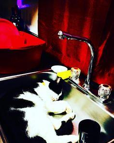 Heres Nachos Best Friend! Im babysitting this cat & he fell asleep in my sink!#CatsOfInstagram #Meow #BlackAndWhite #Kitten #Babysitting #Little #Baby #Pumpkin #Cat #Kittens #Weekend #Vibes #InteriorDesign #Kitchen #Swag #InstaDaily #Photography #Baby #Cats #Instagood #PetsOfInstagram #FrenchGirl #KittyCat #BayArea #InstaLove #PetsOfInstagram #Cute #Pets #Animals