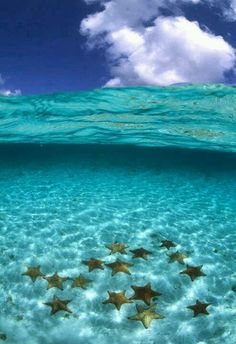 Starfish in serene water, Bora Bora