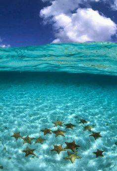 Starfish in serene water, Bora Bora