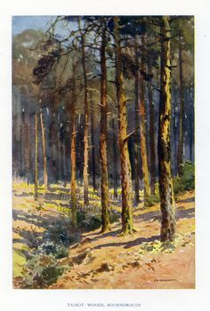 Talbot Woods In Bournemouth by E.W. Haslehust