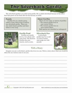 The silverback gorilla is a special animal. This magnificent male is part of an endangered species. Complete this sheet to learn all about this gentle giant. 6th Grade Ela, Third Grade Science, 2nd Grade Reading, Grade 3, Fact And Opinion Worksheet, Silly Words, Dian Fossey, One And Only Ivan, Silverback Gorilla