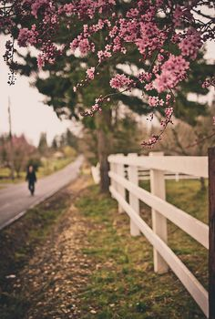 lovely flowers and white picket fence. I also love this kind of rail fencing.