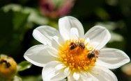 Apicultura: diferença entre a abelha rainha e a abelha operária