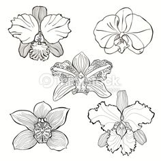 orchid pattern - Szukaj w Google