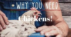 Do you have chickens? I believe every homestead should have chickens. Read here to find out why they are the perfect homestead animal! Raising Backyard Chickens, Cute Chickens, Baby Bar, Laying Hens, Chicken Feed, Baby Chicks, Go Outside, Homesteading, Big