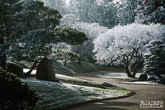 Hoar Frost in Japanese Gardens Lethbridge... magical