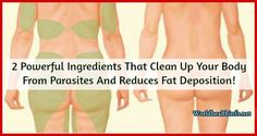 2 Powerful Ingredients That Clean Up Your Body From Parasites And Reduces Fat Deposition!