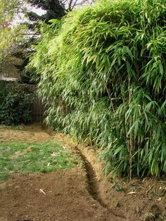 Digging a small trench around bamboo is a good way to keep it from spreading to unwanted areas. Or use an underground barrier of around 8-12 inches. Planting the bamboo on a raised surface will lessen the depth needed for a trench or barrier