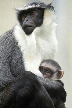Monkey Mama & baby
