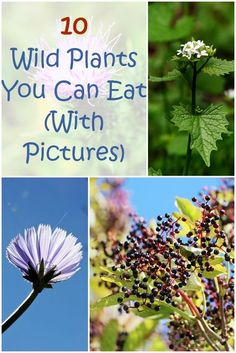 10 Wild Plants You Can Eat - In the wild, you can't be picky about what to eat. In some cases, you'll have no choice but to forage. Foraging for wild edible plants can be a great way to stay nourished. However, you need to make sure you're picking the rig Healing Herbs, Medicinal Plants, Poisonous Plants, Natural Healing, Survival Food, Survival Skills, Survival Stuff, Survival Life, Camping Survival