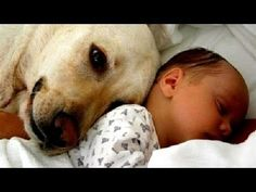 Cats and dogs meeting babies for the first time - Cute animal compilation - YouTube