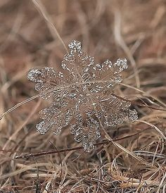 Close Up Photos of Snowflakes by andrey osekin...
