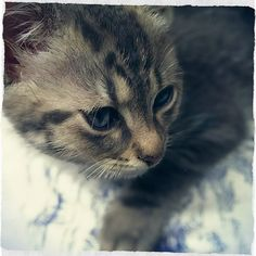 Tiny baby Sam on his first day here. #kitten #kittens #cute