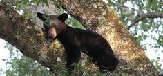 Wekiwa Springs State Park - http://www.activexplore.com/activity/wekiwa-springs-state-park/
