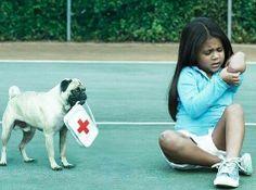 Pug First Aid.