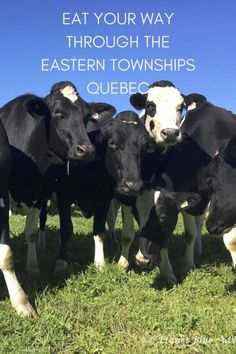 Eastern Townships A bucolic getaway filled with wineries, cheesemakers and food producers. Voyage Montreal, Of Montreal, Alberta Canada, Canada Travel, Travel Usa, Travel Couple, Family Travel, Canada Vancouver, Ontario Travel