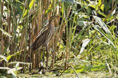 _Q2E0367 Danube Delta, Boat Tours, Bird Watching, Landscape, Scenery, Corner Landscaping