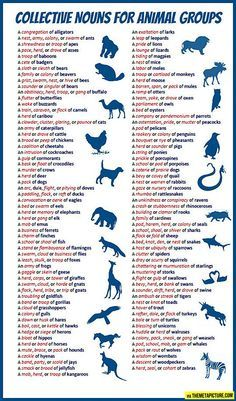 I was literally just wondering all of the group names of animals when this posted. Random thought, random info.