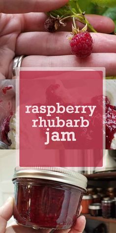 Raspberry Rhubarb Jam Raspberry Rhubarb Jam Fresh raspberries & organic rhubarb come together in this classic fruit-lover& favorite, homemade raspberry rhubarb jam. Here& the recipe to make it yourself at home. Phenomenal ice cream or cheesecake topping! Rhubarb Freezer Jam, Rhubarb Preserves, Freezer Jam Recipes, Jelly Recipes, Rhubarb Jam Recipes Canning, Shrimp Recipes, Raspberry Rhubarb Jam, Rhubarb Jelly, Raspberry Jelly Recipe