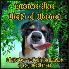 Imagenes Animadas  De perros Llego el Viernes Para Whatsapp