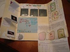 Making a Lapbook for Plant and Animal Cells - WeHaveKids - Family Science Education, Teaching Science, Science Activities, Plant Cell Diagram, Plant And Animal Cells, Biology Classroom, Math Class, 21 Day Fix, Trees To Plant