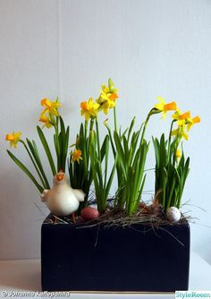 blommor,påsk,påskliljor,narcisser Plants, Photo Illustration, Planters, Plant, Planting