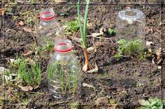 Treibhäuschen aus Plastikflaschen / Little greenhouses made of plastic bottles / Upcycling