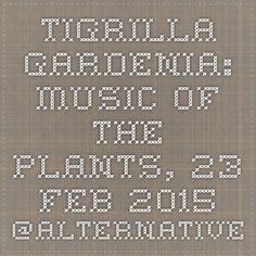 TIGRILLA GARDENIA: Music of the Plants, 23 Feb 2015 @Alternatives: talks on spirituality, creativity, wellbeing and self development in London.