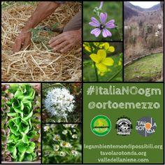 #ItaliaNOogm #OrtoNOogm #FestambienteMondiPossibili www.legambiente.it/italia-no-ogm