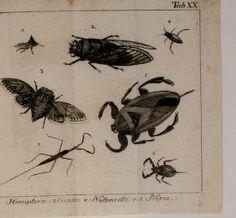 Unterhaltungen in der Naturgeschichte aller Arten Insekten : - Biodiversity Heritage Library