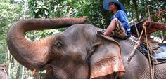 Tragic Death of British Tourist Shows What's Wrong With Elephant Rides | PETA UK