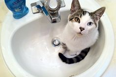 "17 Cats Who Know That The Sink REALLY Belongs To Them #refinery29  http://www.refinery29.com/the-dodo/135#slide-17  ""This is my front-row seat for watching you get ready in the mornings."""