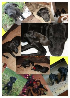 Luna's Life Collage part 4 R.I.P Baby girl Love and Miss you! 10-11-11 to 07-29-13