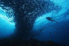 Palau Diving. Pacific