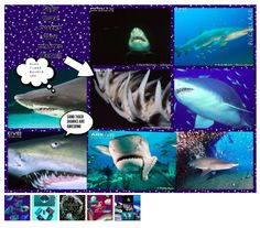 Pic Collage Shark Studies in 3rd grade: http://vveedtech.weebly.com/vve-ed-tech-blog/pic-collage-across-the-curriculum