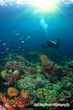 Raja Ampat Islands, Indonesia...Conservation International suggests that marine life diversity is the highest recorded on earth.