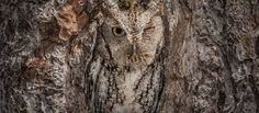 Image result for camouflage animals