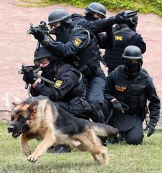 hungary sf more military dogs german shepherd dogs german shepherds . Military Working Dogs, Military Dogs, Police Dogs, Schaefer, War Dogs, German Shepherd Dogs, German Shepherds, Shepherd Puppies, Service Dogs
