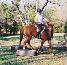 """Written by Sylvana Smith This article originally appeared in Eclectic Horseman Issue No.5 Subscribe Today! """"What did you work on today?"""" asked a friend, who knew I'd volunteered to work a four-year-old Thoroughbred mare that has been head-shy, bucking, bolting, pulling, rooting, spooking, balking, and traveling hollow with her young rider. """"Sounds like you had …"""