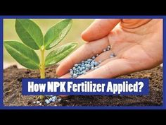 How to Apply NPK Fertilizer to Plants? Compost Soil, Garden Compost, How To Start Composting, Fertilizer For Plants, All Plants, Plant Holders, Organic Gardening, Outdoor Gardens, How To Apply