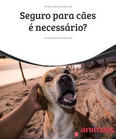 Seguro para cães é necessário? Confira em que casos neste artigo  Quando pensamos em fazer um seguro para um #cão, provavelmente pensamos que esse tipo de #serviço será útil apenas se ele #morder alguém ou outro cão. #Conselhos